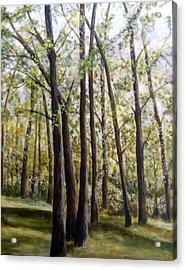 Trees Acrylic Print by Lorna Skeie