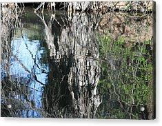 Trees Mirrored In A Lake Acrylic Print by Carol Hakobian