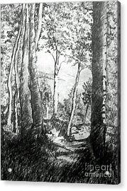 Trees Near The Lake Acrylic Print