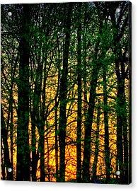 Trees No.2 Acrylic Print by Michael Putnam