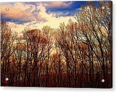 Trees No.3 Acrylic Print by Michael Putnam