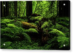 Acrylic Print featuring the photograph Trees Of Mystery by TL Mair