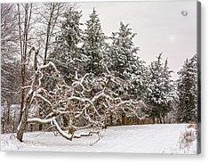 Trees Of Winter Acrylic Print