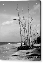Trees On The Beach Black And White Acrylic Print by Rosalie Scanlon