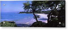 Trees On The Beach, Mauna Kea, Hawaii Acrylic Print