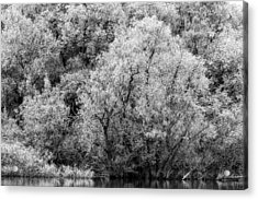 Trees On The River Acrylic Print