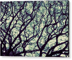 Trees Acrylic Print by Ranjini Kandasamy