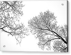 Acrylic Print featuring the photograph Trees Reaching by Marilyn Hunt