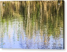 Trees Reflect In Water  Acrylic Print by Vladi Alon
