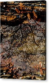 Acrylic Print featuring the photograph Tree's Reflection by Iris Greenwell