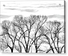 Acrylic Print featuring the photograph Trees Silhouette Black And White by Jennie Marie Schell