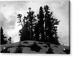 Trees Silhouettes Acrylic Print