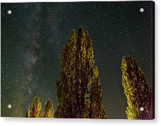 Trees Under The Milky Way On A Starry Night Acrylic Print