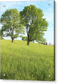 Summer Trees 2 Acrylic Print