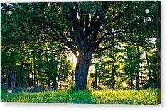 Treescape Acrylic Print