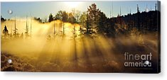 Treetop Shadows Acrylic Print
