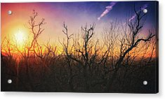 Treetop Silhouette - Sunset At Lapham Peak #1 Acrylic Print by Jennifer Rondinelli Reilly - Fine Art Photography