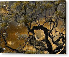 Treetop Sunset Acrylic Print by Jim Pavelle