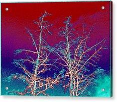 Treetops 4 Acrylic Print