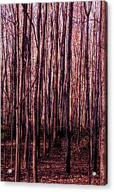 Treez Red Acrylic Print