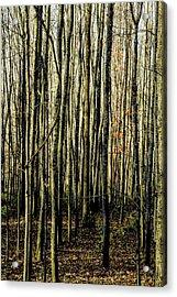 Treez Yellow Acrylic Print