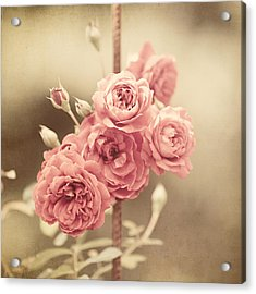 Trellis Roses Acrylic Print by Lisa Russo