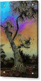 Acrylic Print featuring the photograph Trembling Tree by Lori Seaman