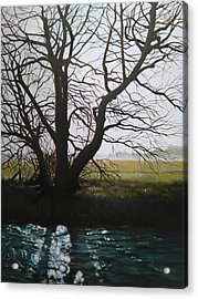 Trent Side Tree. Acrylic Print