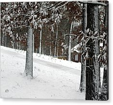 Tress Of Snow Acrylic Print by Lynn Reid