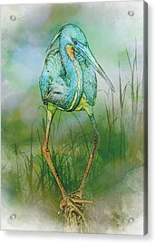Acrylic Print featuring the photograph Tri-colored Heron Balancing Act - Colorized by Patti Deters