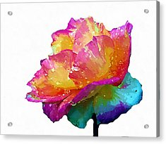 Acrylic Print featuring the photograph Tri Color Rose by Joseph Frank Baraba