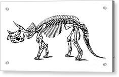 Triceratops Dinosaur Tee Acrylic Print by Edward Fielding