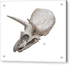 Triceratops Skull Acrylic Print
