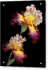 Tricolor Iris Pair Acrylic Print by Dave Mills