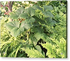 Trifolium Acrylic Print