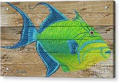 Triggerfish Acrylic Print