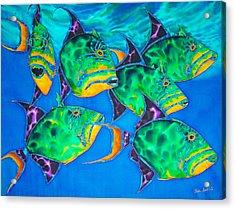 Queen Triggerfish Acrylic Print