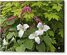Trillium And Bleeding Hearts1079 Acrylic Print