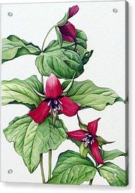 Acrylic Print featuring the painting Trillium Trio by Margit Sampogna