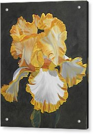 Trimmed In Yellow 2 Acrylic Print by Robert Tower