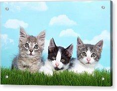 Best Of Friends Acrylic Print