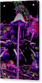 Trip Acrylic Print by Frederick Messner