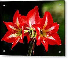 Acrylic Print featuring the photograph Triple Delight by Blair Wainman