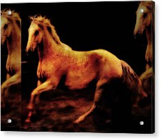 Triple Horse Acrylic Print by Nick Sokoloff