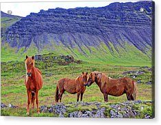Acrylic Print featuring the photograph Triple Horses by Scott Mahon