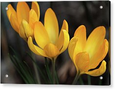 Acrylic Print featuring the photograph Triplets by Connie Handscomb