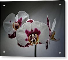 Triplets Acrylic Print by Karen Stahlros