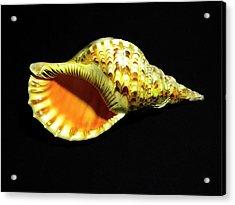 Triton Trumpet Seashell Cymatium Tritonis Acrylic Print by Frank Wilson