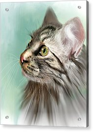 Trixie The Maine Coon Cat Acrylic Print by Angela Murdock
