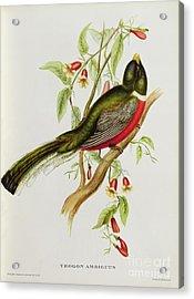 Trogon Ambiguus Acrylic Print by John Gould